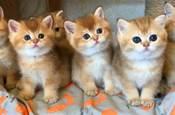 如果養了很多隻貓,那買沙發一定要買有扶手的,這樣才有得坐!