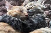 看清楚了,小貓咪都比你會撩,怪不得你單身~