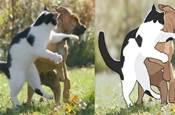 突然發現,貓咪都有做刺客的潛力