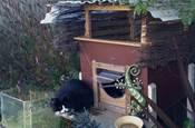 鏟屎官為愛貓做了一個戶外小房子,太可愛啦~
