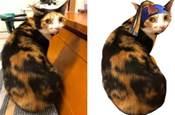 買零食還「附送」了一隻三花貓,把貓帶回家後越看越想笑