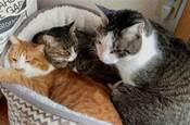 好煩惱啊,家裡的貓窩太受歡迎了