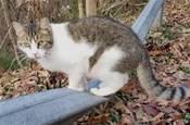 一隻貓能沉到哪去?能把地都壓塌!