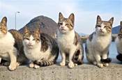 貓咪去世三年後,我才發現它也非常愛我!別錯過這些貓咪愛的表示