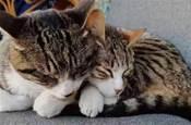 全網都以為復旦大學的貓被偷,幾天後…氣得想罵貓!!