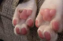 用一張圖證明你有貓,哭著哭著笑出鼻涕泡!